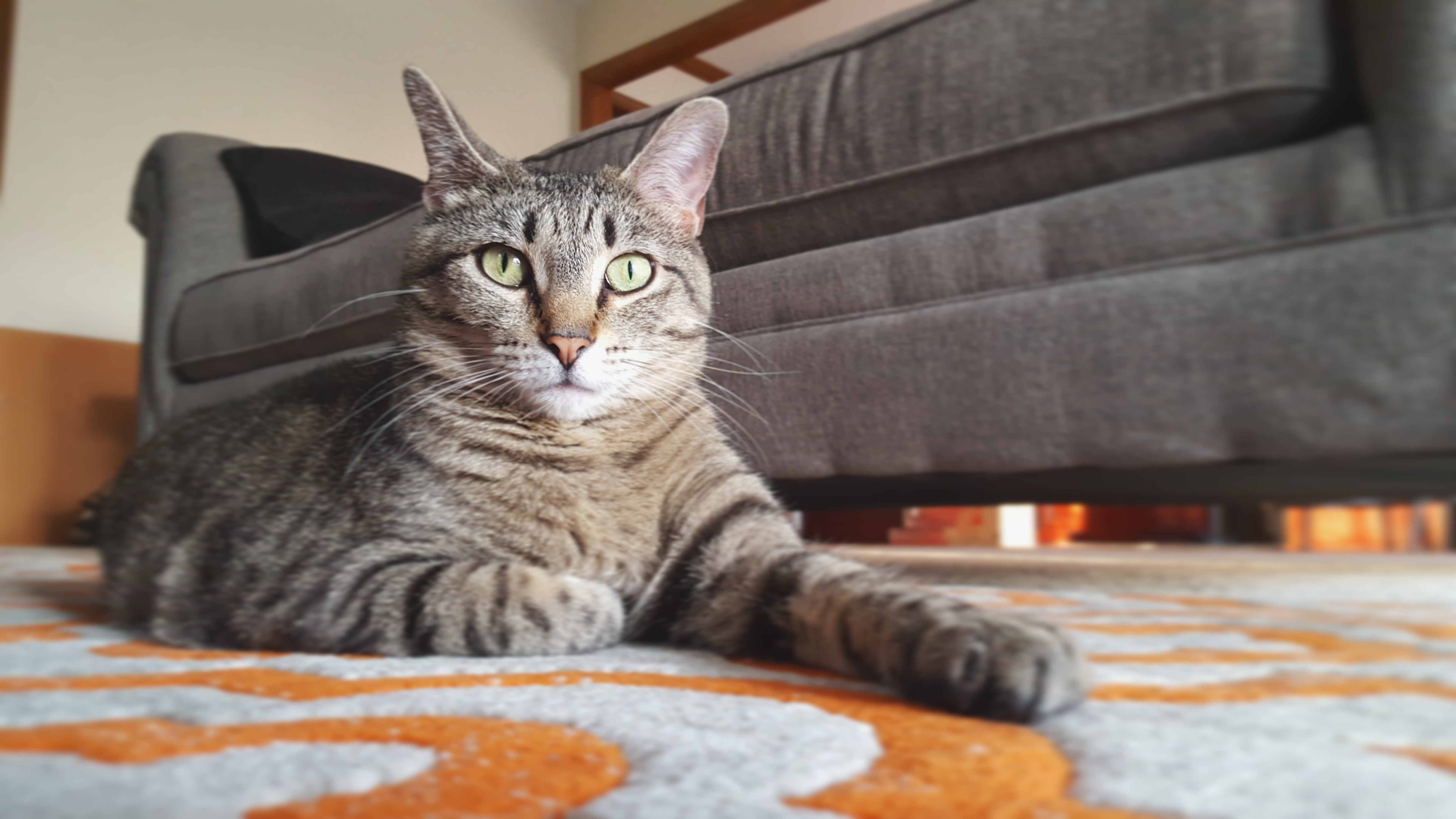Aurora, a black/grey/tan tabby tiger, is lying on the rug in front of the couch like a queen.