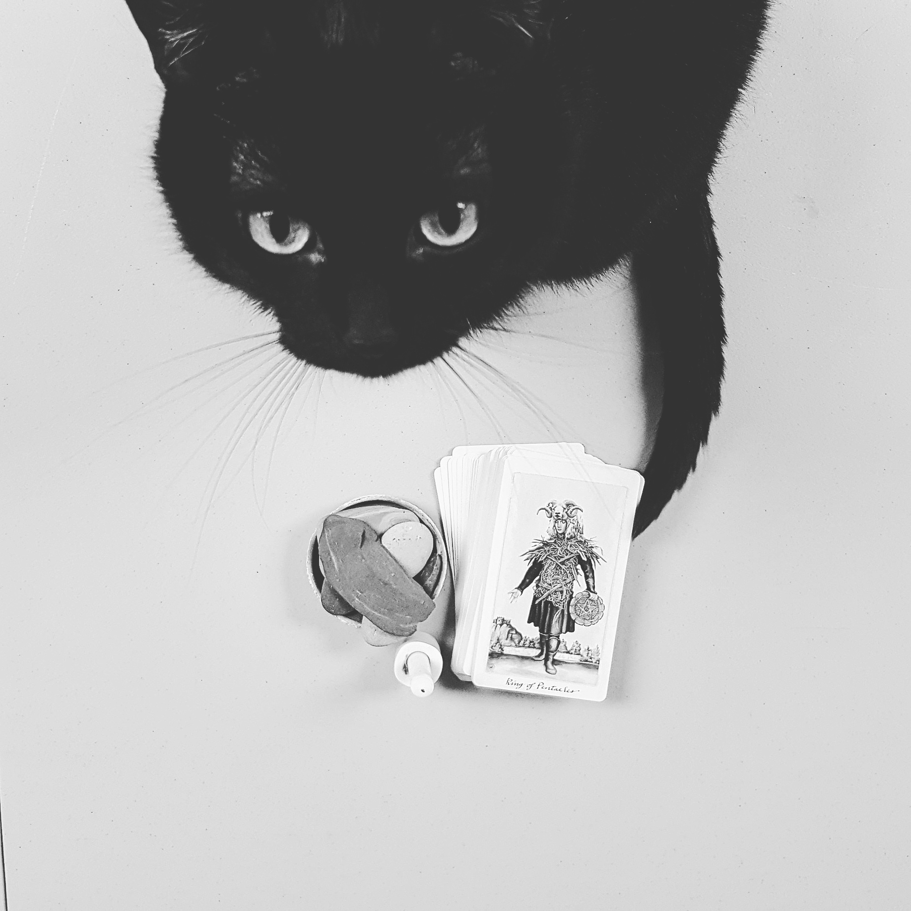 Charlotte, a black cat with very tiny white markings on her back toes, and a spot of white on her chest and belly, is seen here staring straight up into the camera while she sits in front of tarot cards, a candle, and a rock pile.