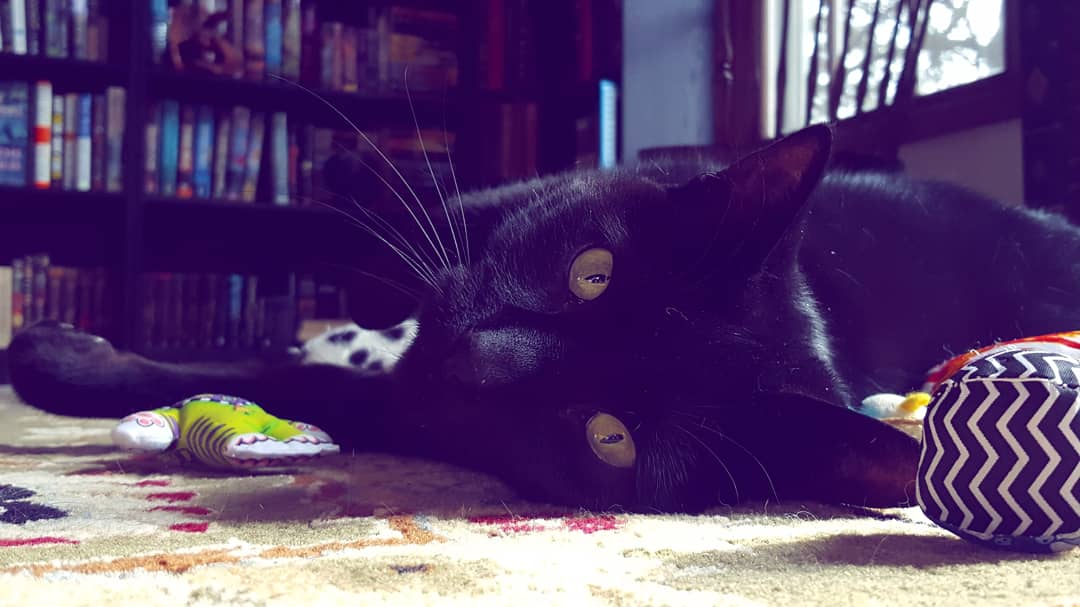 Franklin, a black cat, is seen here lying on the floor surrounded by toys. In this photo, he is staring into the camera, stretched out on the floor.
