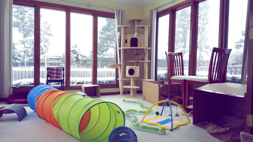 The cat room has a very tall cat tower in one corner. It's a sunroom, so the walls are all windows. There are tunnels in the center of the floor. Counter barstool chairs by the windows that they like to sit on. And other cat toys strewn about. Also some cardboard boxes.