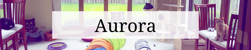 """Header graphic that says """"Aurora"""" over an image of the cats in the cat room."""