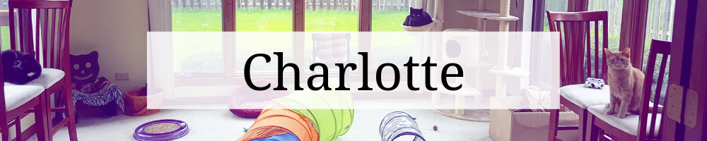 """Header graphic that says """"Charlotte"""" over an image of the cats in the cat room."""